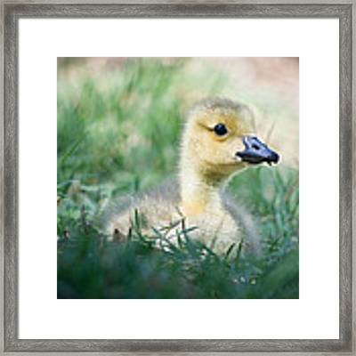 Rest Framed Print by Priya Ghose