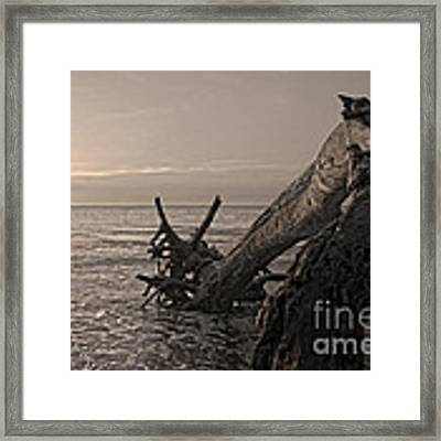 Returning To The Sea Framed Print by Glenda Wright