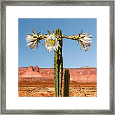 San Pedro Cactus Framed Print by Nancy Strahinic