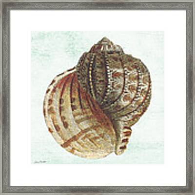 Shell Treasure-c Framed Print by Jean Plout