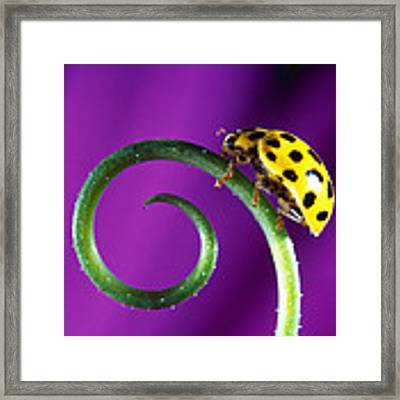 Side View Close Up Of Yellow Ladybug Framed Print by Panoramic Images