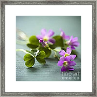Sleeping Beauty Wild Flower Framed Print by Jan Bickerton