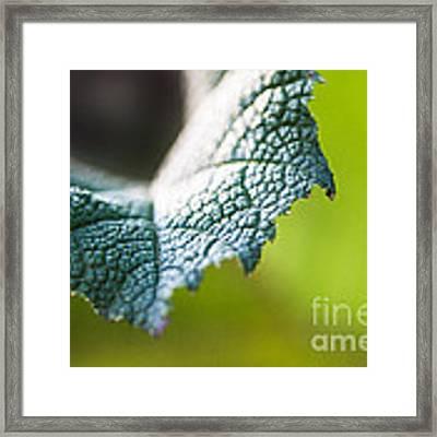 Slice Of Leaf Framed Print by John Wadleigh