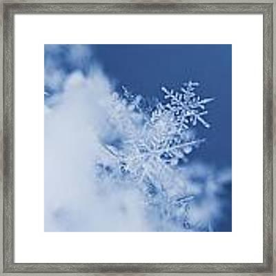 Snowflakes 2 Framed Print