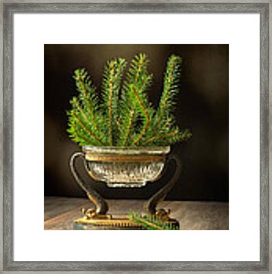 Sprigs Of Pine Tree Framed Print by Amanda Elwell