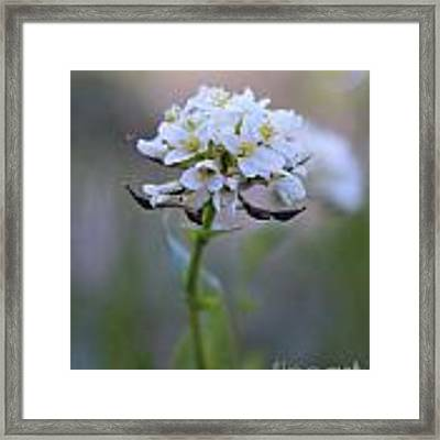 Spring In The Cimarrons Framed Print by Kate Avery