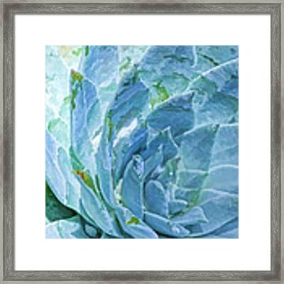Succulent Swirl Framed Print by Douglas MooreZart