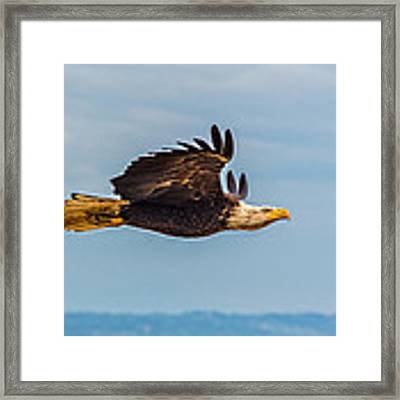 The Art Of Flight Framed Print by Ian Stotesbury