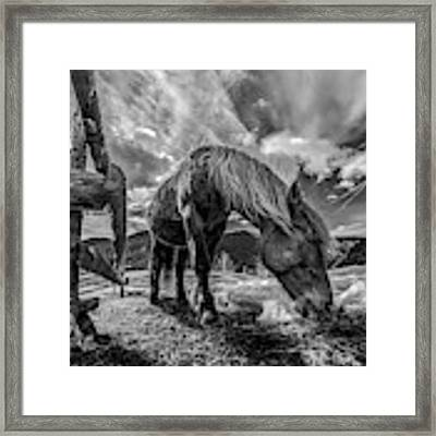 The Horse Framed Print by Faris