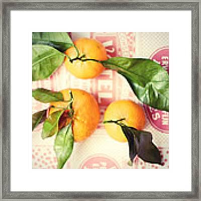 Three Tangerines Framed Print by Lupen  Grainne