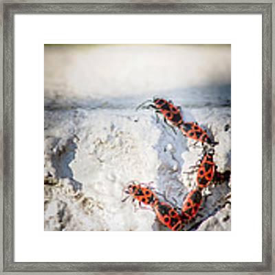 Une Ascension Difficile . Hard Climbing  Framed Print by Stwayne Keubrick