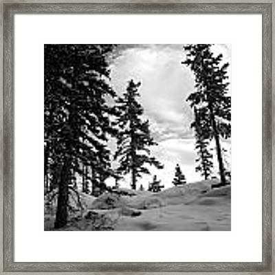 Winter Pines Silhouetted Against The Sky Framed Print by Cascade Colors