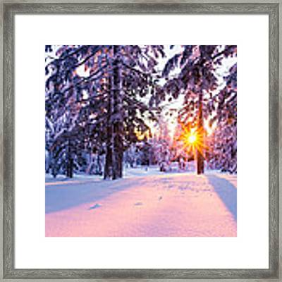 Winter Sunset Through Trees Framed Print by Priya Ghose