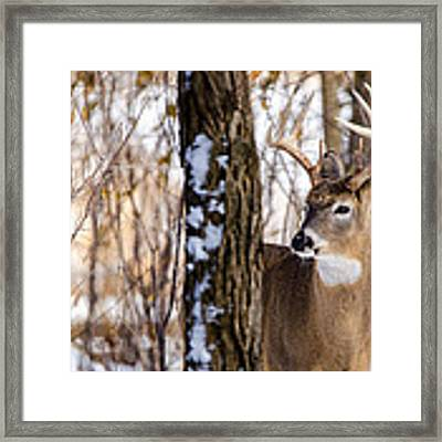 Woodland Outlaw Framed Print by Steven Santamour