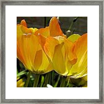 Yellow Framed Print by Ralph Jones