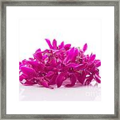 Purple Orchid Pile Framed Print by Atiketta Sangasaeng
