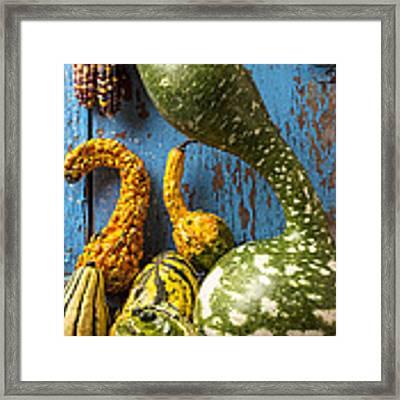Autumn Gourds Framed Print by Garry Gay