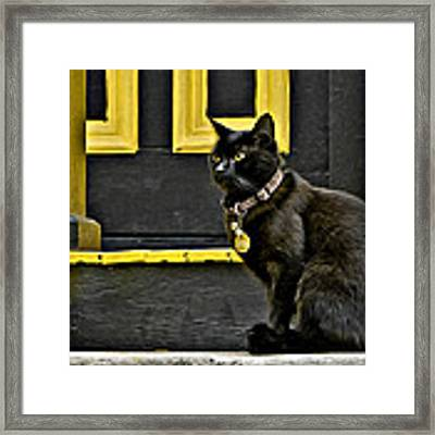 Black Cat Yellow Trim Framed Print by Williams-Cairns Photography LLC