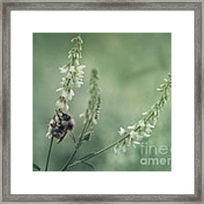 Collecting The Summer Framed Print