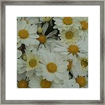 Daisy Framed Print by Ralph Jones
