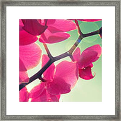 Dolce Framed Print by Amy Tyler