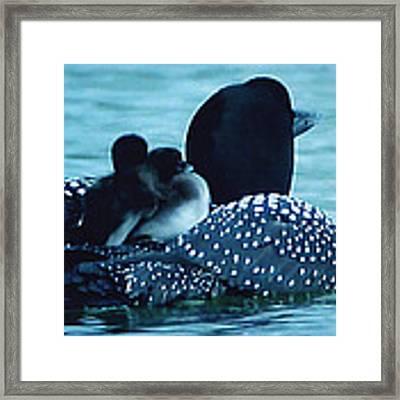 Duck Family Joy In The Lake  Framed Print by Colette V Hera  Guggenheim