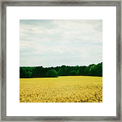 Field Of Yellow Wildflowers Framed Print