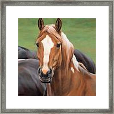 wild horse paintings