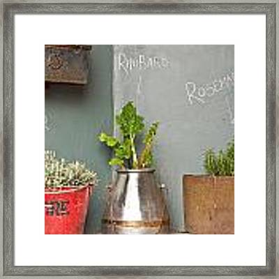 Herbs Framed Print by Tom Gowanlock