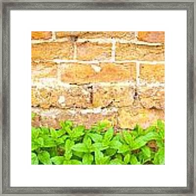 Mint Framed Print by Tom Gowanlock