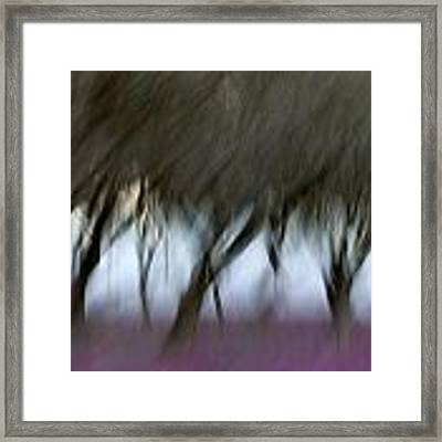 Orchard In Springtime Framed Print