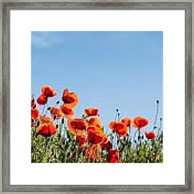 Poppy Flowers 01 Framed Print by Nailia Schwarz