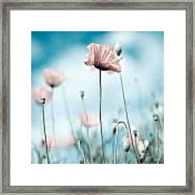 Poppy Flowers 10 Framed Print