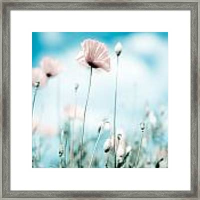 Poppy Flowers 13 Framed Print by Nailia Schwarz