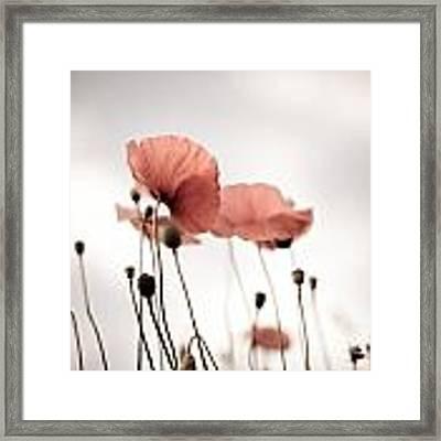 Poppy Flowers 16 Framed Print by Nailia Schwarz