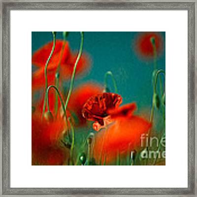 Red Poppy Flowers 05 Framed Print
