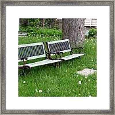Summer Bench And Dandelions Framed Print by Lorraine Devon Wilke