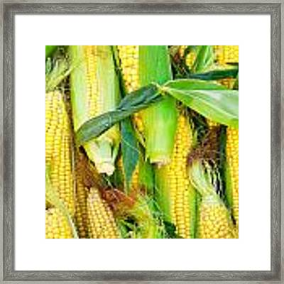 Sweetcorn Framed Print