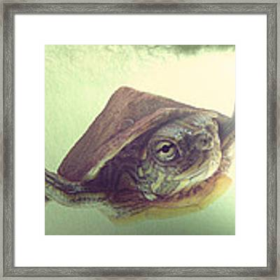 Swimming Lesson Framed Print