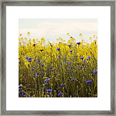 Yellow And Blue Wildflowers Framed Print by Kim Fearheiley