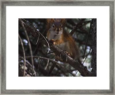 Nuts    Is My Name Framed Print by Dennis Wilkins