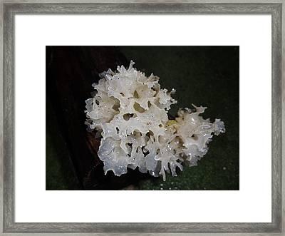 White Jelly Fungus Framed Print by Trudy Brodkin Storace