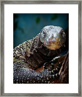 A Crocodile Monitor Portrait Framed Print by Lana Trussell