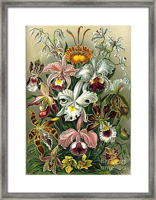 A Lithographic Color Plate From Ernst  Framed Print by MotionAge Designs