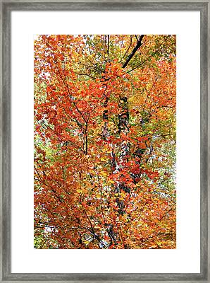 Autumn Confetti Framed Print