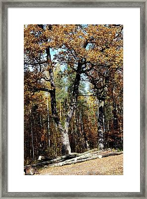 Autumn In Forest Framed Print by Henryk Gorecki