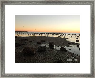 Beach Rocks Barnacles And Birds Framed Print by Expressionistart studio Priscilla Batzell