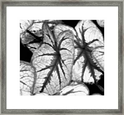 Black And White Was My First Love Framed Print by John Toxey