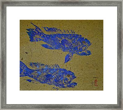 Black Sea Bass - Rockfish Framed Print