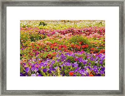 Blooming Colorful Garden  Framed Print by Art Spectrum
